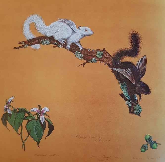 Aquarelle de James Prosek : des écureuils volants.